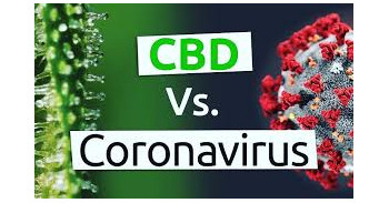 Is CBD Oil a possible Cure for Coronavirus?